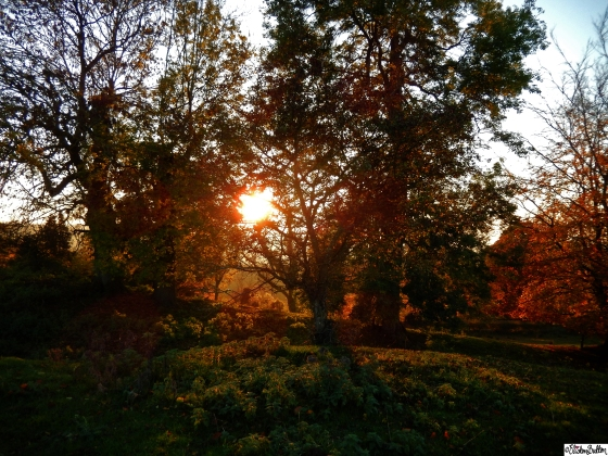 Autumn Sun through Autumn Leaves at Dovers Hill, Cotswolds, UK - An Autumn Adventure at www.elistonbutton.com - Eliston Button - That Crafty Kid