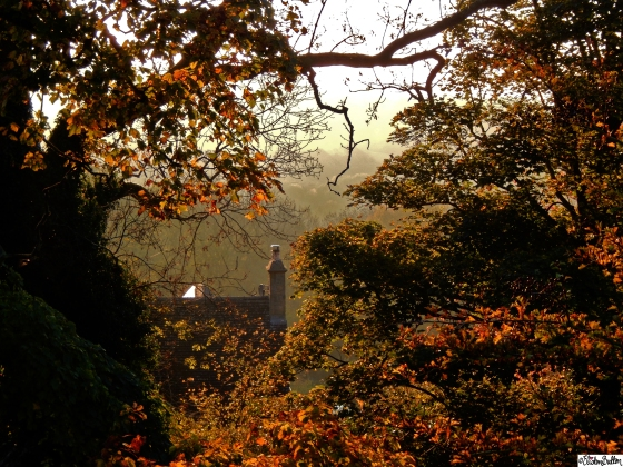 House Peeking through Misty Autumn Trees on Dovers Hill, Cotswolds - An Autumn Adventure at www.elistonbutton.com - Eliston Button - That Crafty Kid