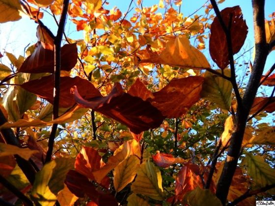 Red, Brown, Orange, Yellow and Green Leaves on Autumn Trees at at Dovers Hill, Cotswolds, UK - An Autumn Adventure at www.elistonbutton.com - Eliston Button - That Crafty Kid